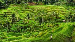 Tempat Wisata di Bali Paling Menakjubkan untuk Dikunjungi