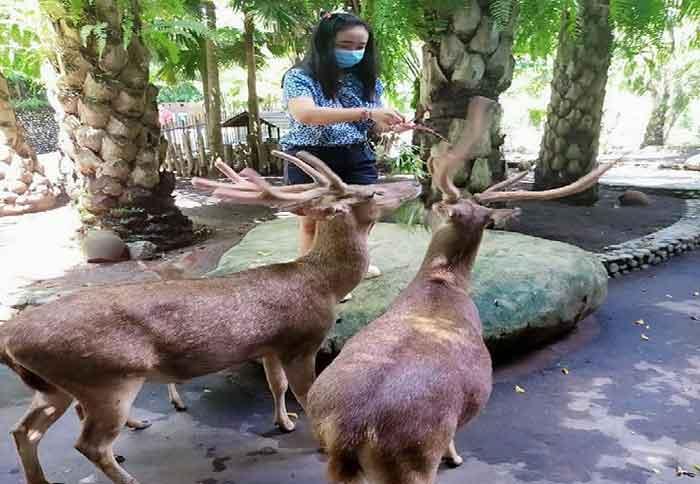 Libur Lebaran di Bali Zoo 2021