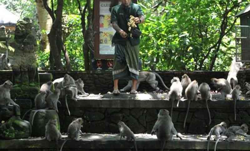 dtw monkey forest ubud bali